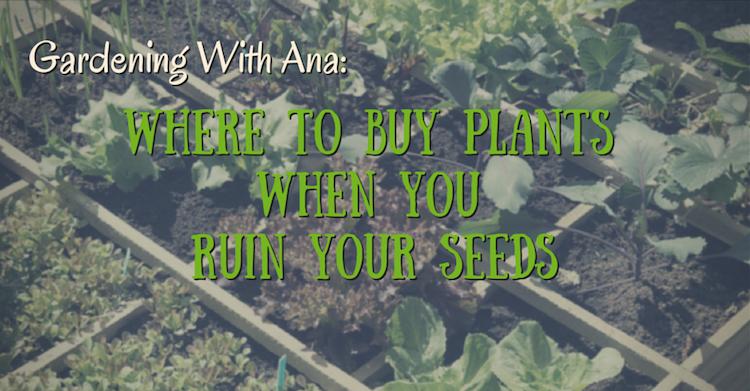 gardening-with-ana