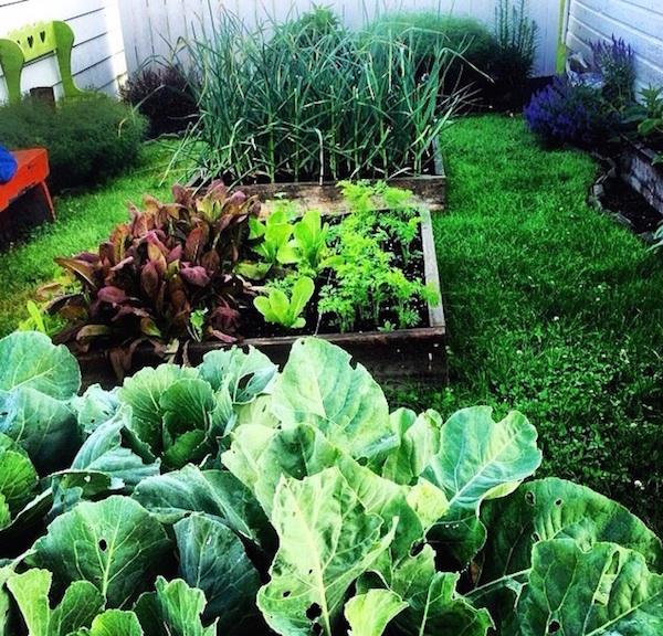 aliquippa-urban-garden