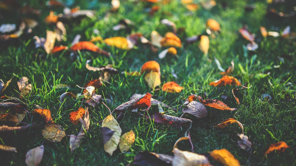 Fall lawn care tips from klemen lawn care your beaver county - Autumn lawn care advice ...