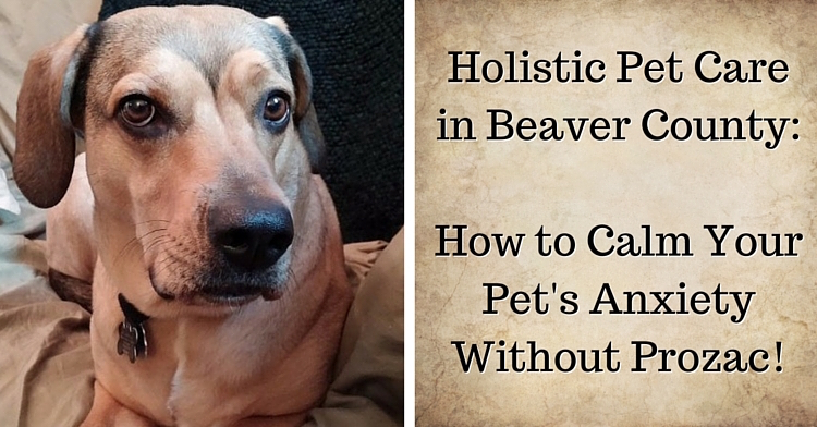 holistic-pet-care