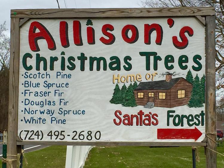 allisons-christmas-tree-01