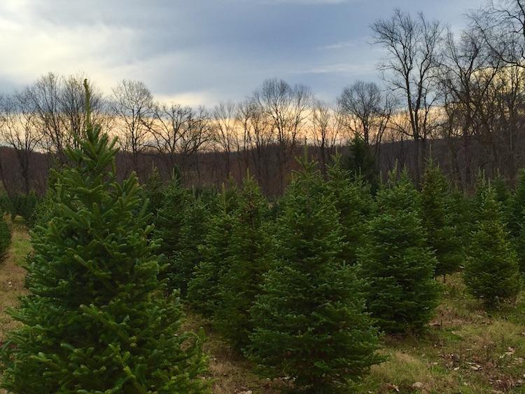 allisons-christmas-tree-04