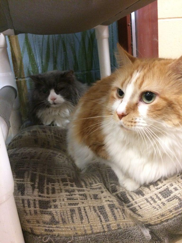 Kitsy and Geordie