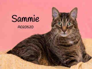sammie2 (1)